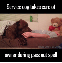 Dank, 🤖, and Dog: Service dog takes care of  you  Service Dog  Colt via Storyful  owner during pass out spell Watching this dog treat his owner during a 'pass out spell' is incredible 🙌🙏❤️