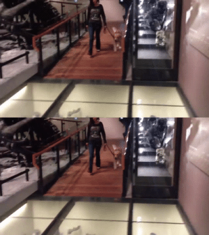 Service doggo walks on glass floor for the first time (Source): Service doggo walks on glass floor for the first time (Source)