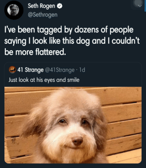seth's looking pretty good there: Seth Rogen O  @Sethrogen  I've been tagged by dozens of people  saying I look like this dog and I couldn't  be more flattered.  41 Strange @41Strange · 1d  Just look at his eyes and smile seth's looking pretty good there