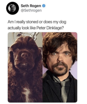 It really does though: Seth Rogen  @Sethrogen  Am I really stoned or does my dog  actually look like Peter Dinklage? It really does though