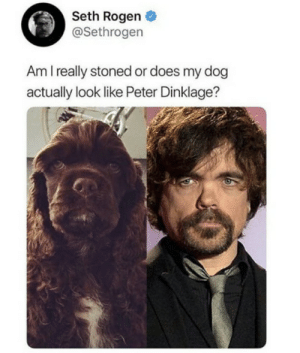 Doppelgangers.: Seth Rogen  @Sethrogen  Am I really stoned or does my dog  actually look like Peter Dinklage? Doppelgangers.