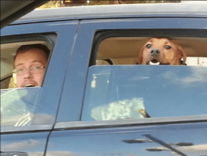 Cute, Tumblr, and Blog: setheverman: awwww-cute:  The moment my dog (and husband) realized I was in the car beside him  Your dog and husband look so happy. Who the hell is that guy with glasses tho?