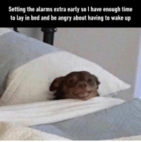 Dank, Time, and Angry: Setting the alarms extra early so I have enough time  to lay in bed and be angry about having to wake up Let the suffering begin.