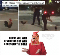 Chicken nugget, we were so close to finding out!: SGAG  SCDF officer rescues rooster on the road  THESTRAITSTIMES  GUESS YOU WILL  NEVER FIND OUT WHY  ICROSSED THE ROAD Chicken nugget, we were so close to finding out!