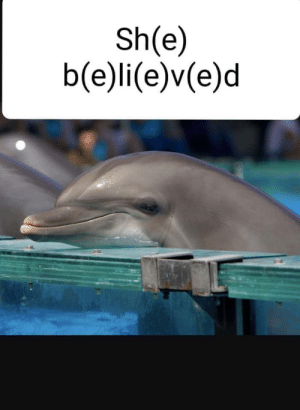 Dank, Memes, and Target: Sh(e)  b(e)li(e)v(e)d Only 14 year old dolphins will understand. by Valkyriescry MORE MEMES