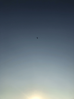 Shades of blue, featuring my friend gliding through the sky: Shades of blue, featuring my friend gliding through the sky