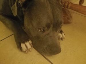 Shadow puppy being adorable and pouty: Shadow puppy being adorable and pouty