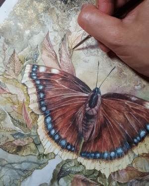 Tumblr, Blog, and Butterfly: shadowscapes-stephlaw: Mourning cloak #butterfly
