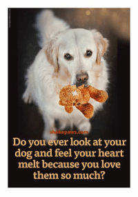 YES <3 Shake Paws: shake paws.com  Do you ever look at your  dog and feel your heart  melt because you love  them so much? YES <3 Shake Paws