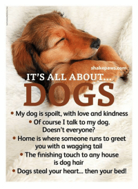 wagging tail: shake paws.com  IT'S ALL ABOUT.  My dog is spoilt, with love and kindness  Of course Italk to my dog.  Doesn't everyone?  Home is where someone runs to greet  you with a wagging tail  The finishing touch to any house  is dog hair  Dogs steal your heart... then your bed!