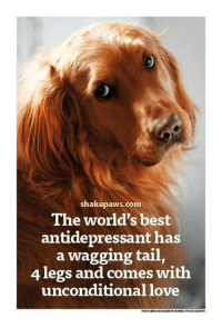 wagging tail: shake paws com  The world's best  antidepressant has  a wagging tail  4 legs and comes with  unconditional love