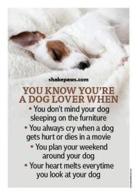 dog lovers: shake paws com  YOU KNOW YOU'RE  A DOG LOVER WHEN  You don't mind your dog  sleeping on the furniture  You always cry when a dog  gets hurt or dies in a movie  You plan your weekend  around your dog  Your heart melts everytime  you look at your dog