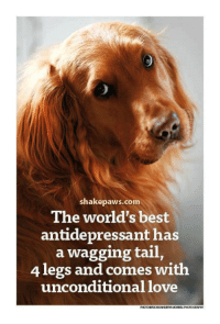Love, Memes, and Best: shakepaws.com  The world's best  antidepressant has  a wagging tail,  4 legs and comes with  unconditional love