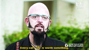Cats, Crying, and Fucking: SHAME YOUR CAT HOW  #MyCatFromhell  Every cat's life is worth something. himteckerjam: rogueofstorms:  drunkvanity:  femmadilemma:  bornthiswayward:  #i've reblogged this like twice#and i think some people are reblogging this as a joke#but bless this man and what he stands for  how is this funny to anyone. Those people obviously don't realize the extremely high kill rate for cats at shelters, not to mention that people literally dump indoor cats outside when they don't want them anymore, and indoor cats often die due to starvation/predators (duh they have no survival skills).   Also - I might also be crying.  Jackson Galaxy is awesome. His story is is that he used to be a drug addict, and that while he was in the beginning of his recovery he saved a stray cat and nursed it back to life, and in return the cat essentially did the same for him, and ever since then, he's taught himself everything there is to know about cats and their behavior. Cats saved his life, so he's saving cats lives. He's awesome.  His show has taught me more about how to take care of a cat than I learned from growing up with one.  Jackson Galaxy is the patron fucking saint of cats and I swear to god I will fight anybody coming for him.You will catch these hands.