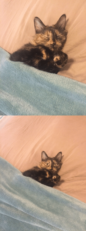 Fucking, Target, and Tumblr: shampain-cocaine: Also look at these fucking pictures the cat sitter sent of my baby