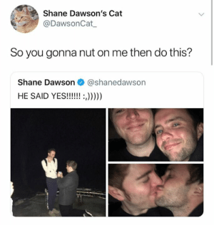 Bruh, Dank Memes, and Shane: Shane Dawson's Cat  @DawsonCat  So you gonna nut on me then do this?  Shane Dawson @shanedawson BRUH