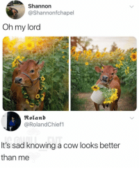 Memes, Sad, and 🤖: Shannon  @Shannonfchapel  Oh my lord  Roland  @RolandChief1  It's sad knowing a cow looks better  than me Same here