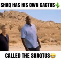 Shaq With His Cactus 🌵😂 - Follow (me) @crazyfilm for more 💯: SHAQ HAS HIS OWN CACTUS  CALLED THE SHAQTUSe Shaq With His Cactus 🌵😂 - Follow (me) @crazyfilm for more 💯