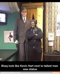 I saw this pic on another page  Lets see if u guys see anything wrong with it -gecko: Shaq look like Kevin Hart next to tallest man  wax statue  Handcraftedby docibeladdict for iRunny j I saw this pic on another page  Lets see if u guys see anything wrong with it -gecko