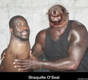 Memes, Shaquille, and Com: Shaquille O'Seal  memes.com Seems legit.