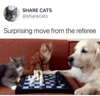 friendly-neighborhood-ehrhardt: : SHARE CATS  sharecats  Surprising move from the referee friendly-neighborhood-ehrhardt:
