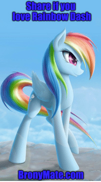 Dating Love And Memes Share If You Rainbow Dash Brony Mate