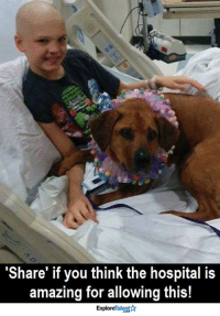 Comfortable, Doctor, and Memes: 'Share' if you think the hospital is  amazing for allowing this!  ExploreTalent 10-Year-Old Staton is undergoing cancer treatment. His doctors let his dog visit him in the hospital everyday for comfort. How wonderful is that? <3  Wow Amazing Dogs