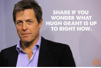 Dank, Wonder, and Hugh Grant: SHARE IF YOU  WONDER WHAT  HUGH GRANT IS UP  TO RIGHT NOW. Does anybody know?