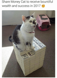 money cat: Share Money Cat to receive bountiful  wealth and success in 2017