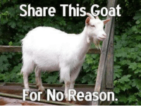 You have goat to be kidding me.: Share This Goat  For No Reason. You have goat to be kidding me.