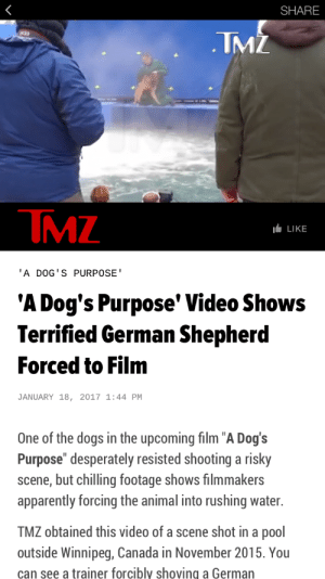 "Being Alone, Animals, and Apparently: SHARE  TMZ  TMZ  LLIKE  'A DOG'S PURPOSE  'A Dog's Purpose' Video Shows  Terrified German Shepherd  Forced to Film  JANUARY 18, 2017 1:44 PM  One of the dogs in the upcoming film ""A Dog's  Purpose"" desperately resisted shooting a risky  scene, but chilling footage shows filmmakers  apparently forcing the animal into rushing water.  TMZ obtained this video of a scene shot in a pool  outside Winnipeg, Canada in November 2015. You  can see a trainer forcibly shoving a German ectoimp:  hillyosaurus:  yowulf:   This HAS to go viral. This pathetic movie is abusing animals in order to film cheap scenes for human entertainment. The dog is clearly terrified but the ""trainers"" have no regard for her safety.  Please share and encourage your friends not to spend money on a movie that uses animal abuse to film!!!  http://www.tmz.com/2017/01/18/a-dogs-purpose-german-shepherd-abuse-video/   Hi yes, ACTUAL dog trainer and dog behaviorist here. Sorry to interrupt your pitchforks and torches fest but this article is extremely misleading and is presented as a shock factor rather then presenting an actual, studied opinion of the video. If you watch the clip, which I did, there is a lot of subtle stuff going on. First of all, rushing water is scary to ANY sort of animal, let alone a German Shepard who isn't really a water dog like a Lab. You can see how the trainer is constantly touching the dog gently on the side and loin. He is reassuring the animal while keeping a snug grip on the collar. (Which is a flat collar btw so it can't really do any damage to the dog even with him holding it) He is also down on the animals level, not hovering above the dog. And if you look closely, you can see that this man is constantly talking to the dog, obviously reassuring the animal. Furthermore, this is a movie dog, they have dealt with all sorts of scary situations before. This is probably the very first time that this animal was introduced to this situation and I bet you money that if we saw more of the clip, you would see them repeat this process slowly and gently until the animal relaxed. Finally, you see the animal try to pull away. Again, perfectly normal for an animal that is scared, but again, you see the trainer pull the dog back (not yank it sharply back or drag it back) and then place the dog in the water. The actual time in the water is extremely brief and you can see that the trainer doesn't let go of the dog and immediately pulls the animal out again after a few seconds. Just like putting a child in the bath tub for a little bit, the trainer is establishing that the water won't harm the dog and kept the training session brief. Convenient that the clip stops before it shows you the trainer rewarding the animal in some way, which I can guarantee you they did. Finally, I will leave you with two things. One, if the dog was actually being abused it would be responding by trying to snap at the person holding the collar and the body language would be pure terror with the tail language and hackles. German Shepards are not scared to tell you when they don't want to do something and this dog is no different. Two, there are so many laws and regulations in place to stop the abuse of animals in movies. There is ALWAYS a representative of these organizations on site during filming whenever there is any sort of animal involved.  Don't spread misinformation and misunderstanding please. Just like your mom forced you to eat your veggies when you were young, sometimes working with animals means encouraging them to go into situations that is way outside their instincts.  Yes please read all this because you wanna know where the video 'leak' came from. PETA. Come on guys. dont fall for PETAs bullshit. This is the group that literally kills perfectly healthy puppies because they think 'its better that they are dead then a pet'. So a movie thats about a dogs loyalty and the bond between humans and pets? Yeah, thats something PETA HATES.So, take all this with a huge grain of of salt. The movie might be good or bad, I dunno. (I think it will be award bait shallow 'tearjerker' tbh) But dont assume that an edited 30 second clip of something, means there was abuse. Even when that dog seems to go under the water. What happens? All trainers snap to getting the dog out, but the edit cuts before we see what happens. So that everyone goes 'oh nooooes the dog ded'Im sure the dog is ok, and im sure that the trainers were just as scared for there dog and gave him lots of treats later. (and probably didnt use that animal for anymore water scenes. Maybe this will turn up some abuse. But really I think its another ploy by PETA. But hold your boycotting till theres more evidence then this clip."
