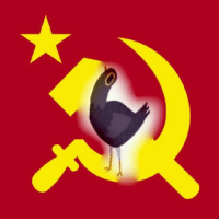 Share to help reclaim trash dove from the alt Reich.: Share to help reclaim trash dove from the alt Reich.