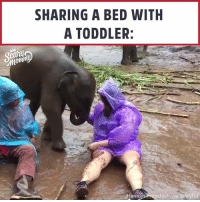 Memes, Elephant, and Baby: SHARING A BED WITH  A TODDLER:  ann  nchick via Storyful Who else wants to play in the mud with a baby elephant 🐘 ...ME?! ❤️Puggy❤️