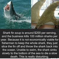 Memes, Shark, and Sharks: Shark fin soup is around $200 per serving,  and the business kills 100 million sharks per  year. Because it is not economically viable for  fisherman to keep the whole shark, they just  slice the fin off and throw the shark back into  the ocean. Unable to swim, the shark sinks  slowly to the bottom of the sea to die a slow  death. This is really disturbing. Faith in humanity lost 😞