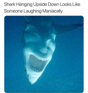 Dank, Memes, and Target: Shark Hanging Upside Down Looks Like  Someone Laughing Maniacally This is horrifying by batmanbutawesome MORE MEMES