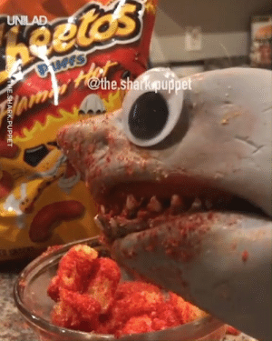 Shark Puppet got to be the best thing on the internet! 😂🦈: SHARK.PUPPET Shark Puppet got to be the best thing on the internet! 😂🦈