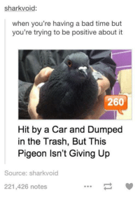 Bad, Cars, and Trash: shark void:  when you're having a bad time but  you're trying to be positive about it  260  Hit by a Car and Dumped  in the Trash, But This  Pigeon Isn't Giving Up  Source: sharkvoid  221,426 notes