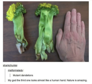 God, Wow, and Nature: sharkchunks:  malformalady:  Mutant dandelions  My god the third one looks almost like a human hand. Nature is amazing. Wow so amazing