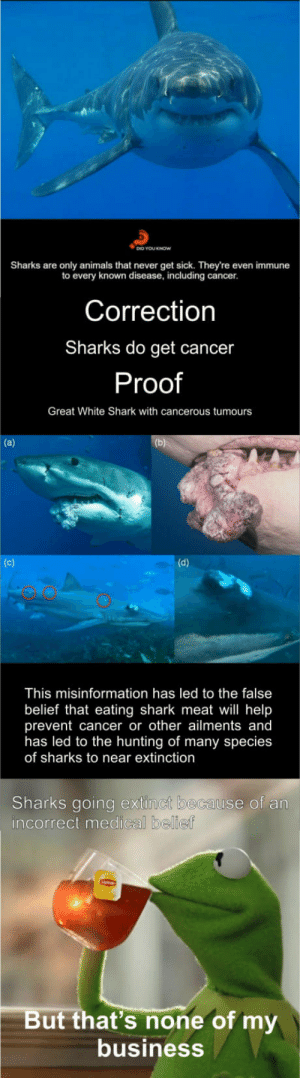 Animals, Shark, and Hunting: Sharks are only animals that never get sick. They're even immune  to every known disease, including cancer.  Correction  Sharks do get cancer  Proof  Great White Shark with cancerous tumours  This misinformation has led to the false  belief that eating shark meat will help  prevent cancer or other ailments and  has led to the hunting of many species  of sharks to near extinction  Sharks going extinct because of an  incorrect medical bellie  But that's none of my  business Just had to correct this post.