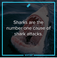 Memes, Shark, and Sharks: Sharks are the  number one cause of  shark attacks.  8SHIT NET Incredible fact:
