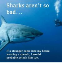 speedo: Sharks aren't so  bad  If a stranger came into my house  wearing a speedo, I would  probably attack him too.