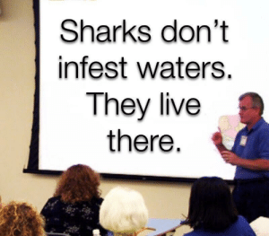Live, Sharks, and They Live: Sharks don't  infest waters.  They live  there