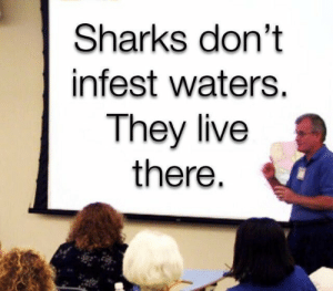 Live, Sharks, and They Live: Sharks don't  infest waters.  They live  there.
