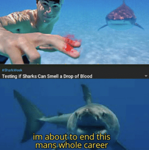 memehumor:RIP Steve:  #SharkWeek  Testing if Sharks Can Smell a Drop of Blood  im about to end this  mans whole career memehumor:RIP Steve