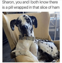 Can't fool mr. spots over here Sharon: Sharon, you and both know there  is a pill wrapped in that slice of ham  Friend of Bae Can't fool mr. spots over here Sharon