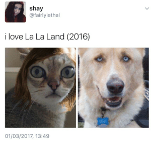 gaspack:  gaspack:  That fookin Cat!  That cat look just like Emma Stone I'm dying!!: shay  @fairlyiethal  i love La La Land (2016)  01/03/2017, 13:49 gaspack:  gaspack:  That fookin Cat!  That cat look just like Emma Stone I'm dying!!