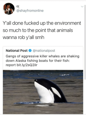 Animals, Killer Whales, and Smh: @shayfromonline  Y'all done fucked up the environment  so much to the point that animals  wanna rob y'all smh  National Post  @nationalpost  Gangs of aggressive killer whales are shaking  down Alaska fishing boats for their fish:  report bit.ly/2sQ2ilr namikawas:  weavemama:  maybe gangster whales is what we need in order to fight climate change  Whales, you're doing great sweeties