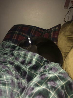 She's mad at me because I woke her up from her nap in the middle of my couch.: She's mad at me because I woke her up from her nap in the middle of my couch.