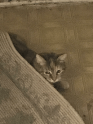 She always has to hide under the rugs.: She always has to hide under the rugs.