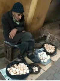 She Asked Him 'How Much Are You Selling the Eggs For?' the ...